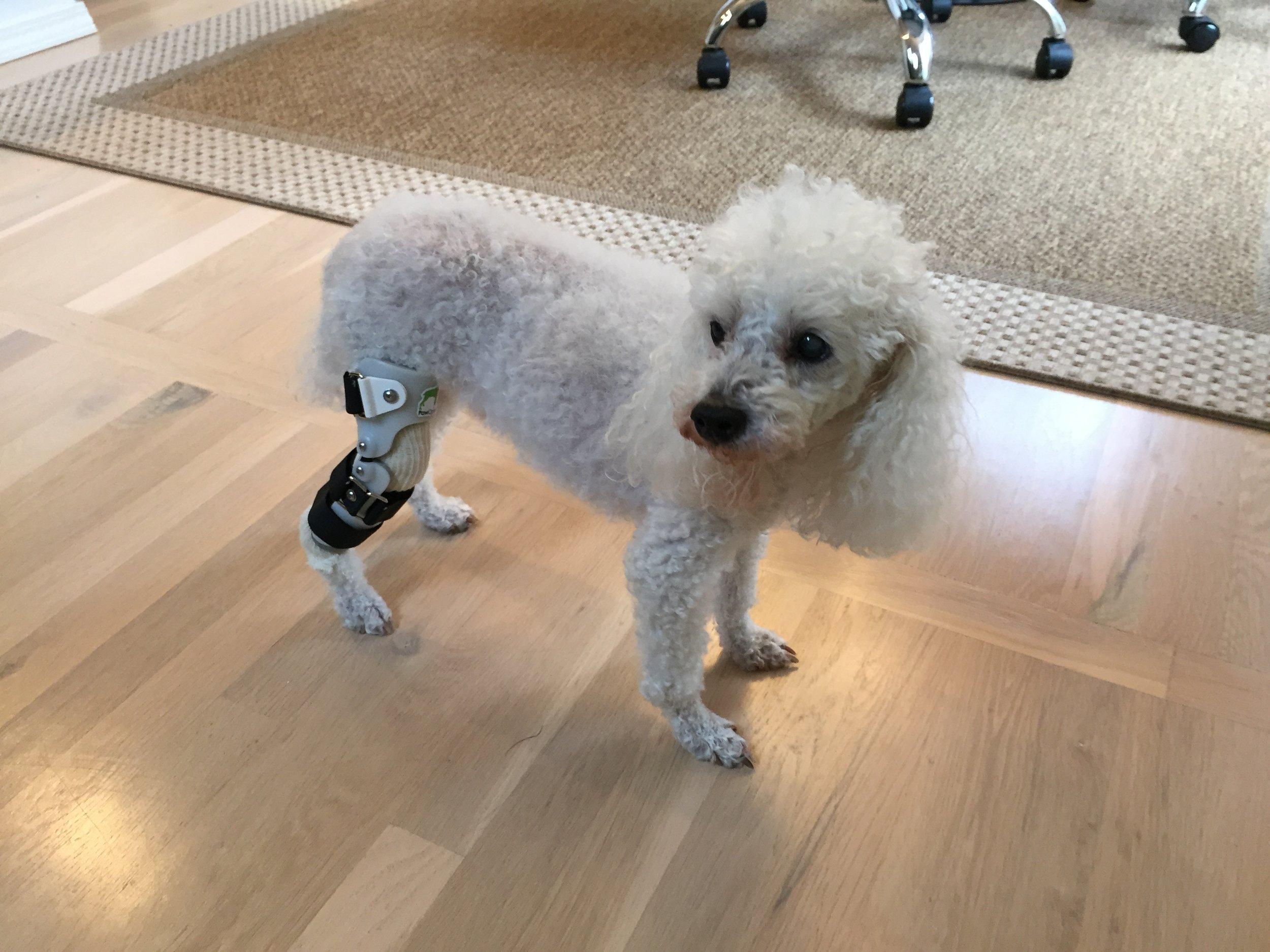Dog Knee / CCL Brace
