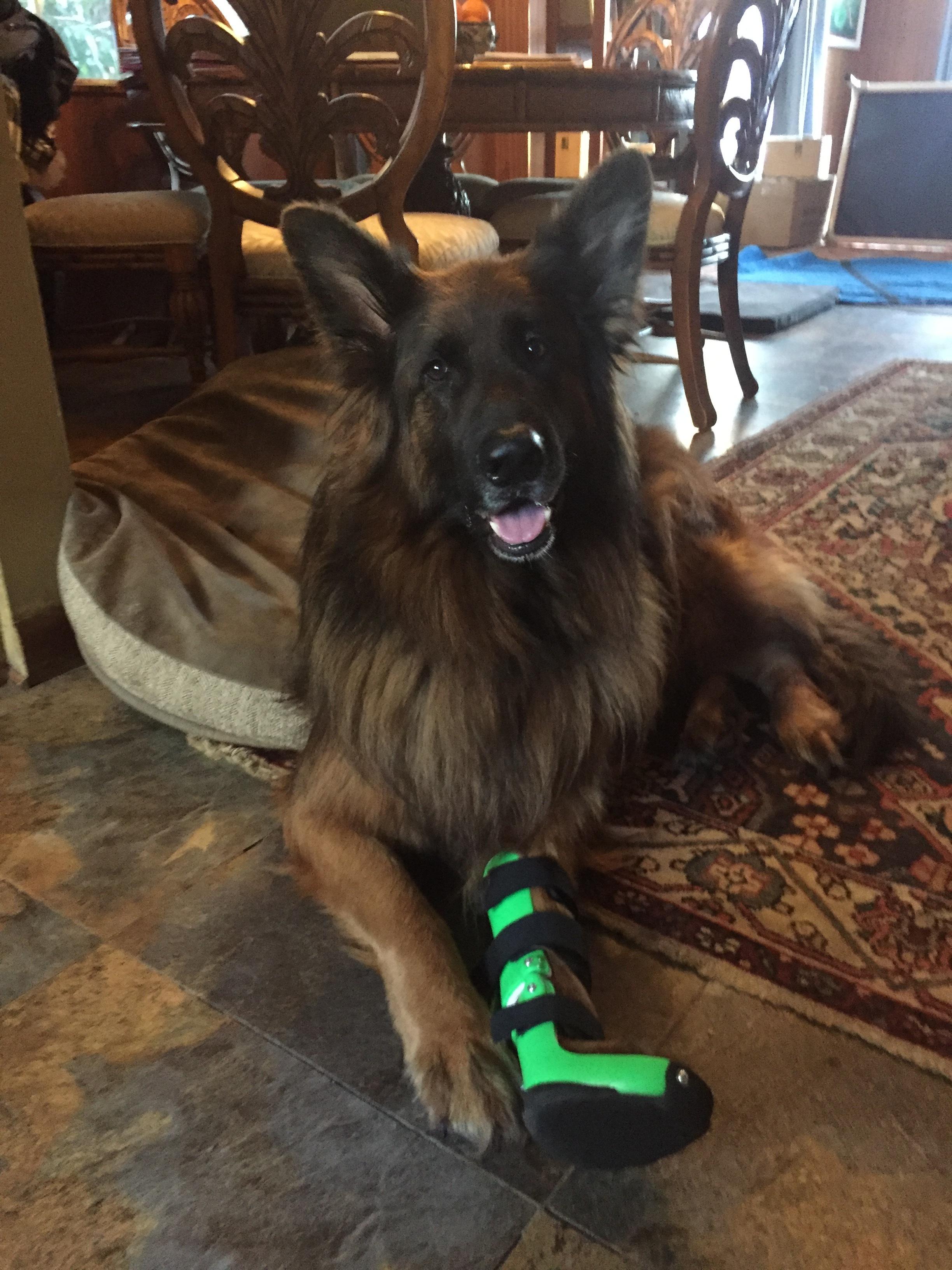 Canine | Dog Carpal Brace