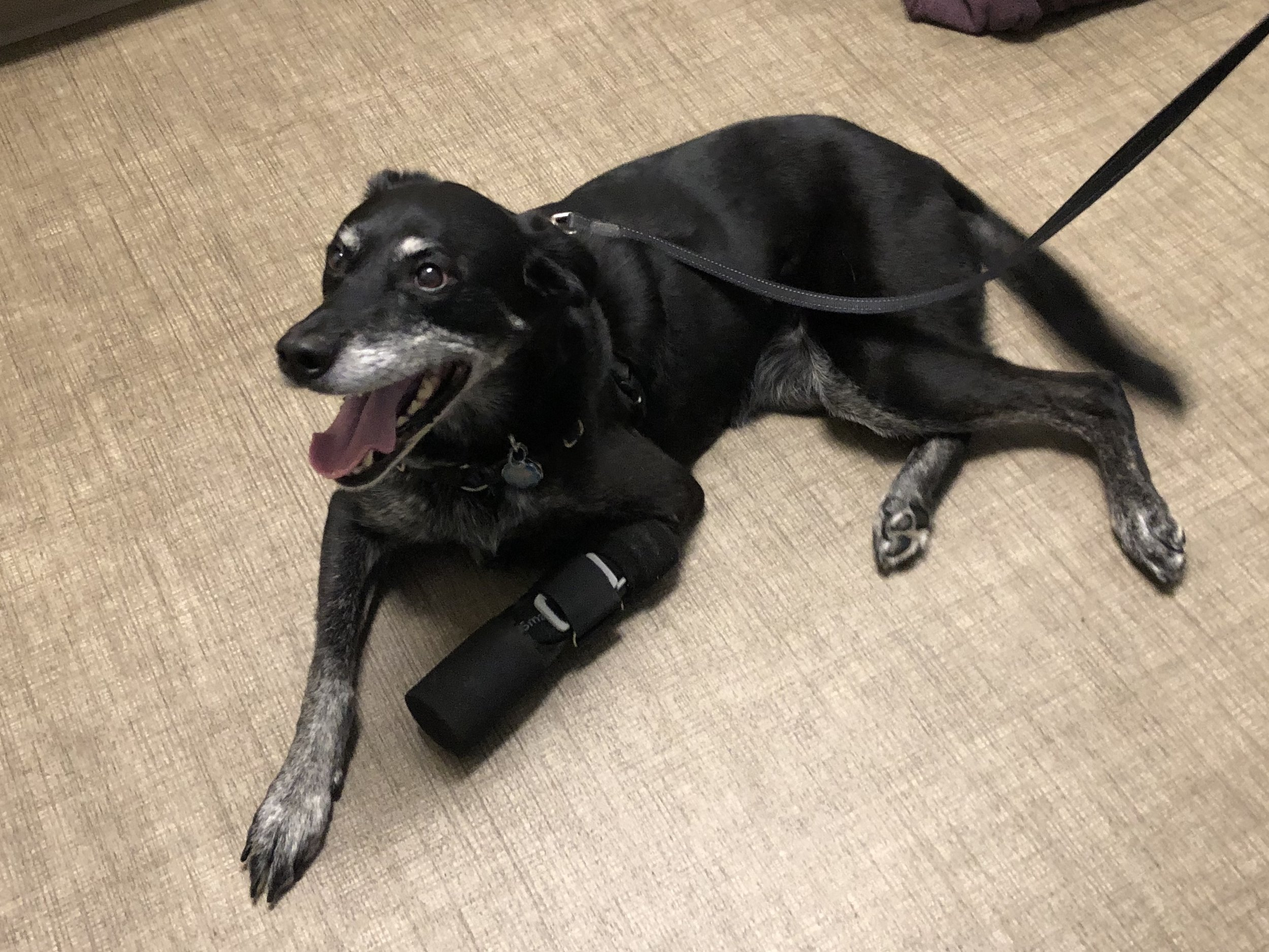 Canine Carpal Prosthesis