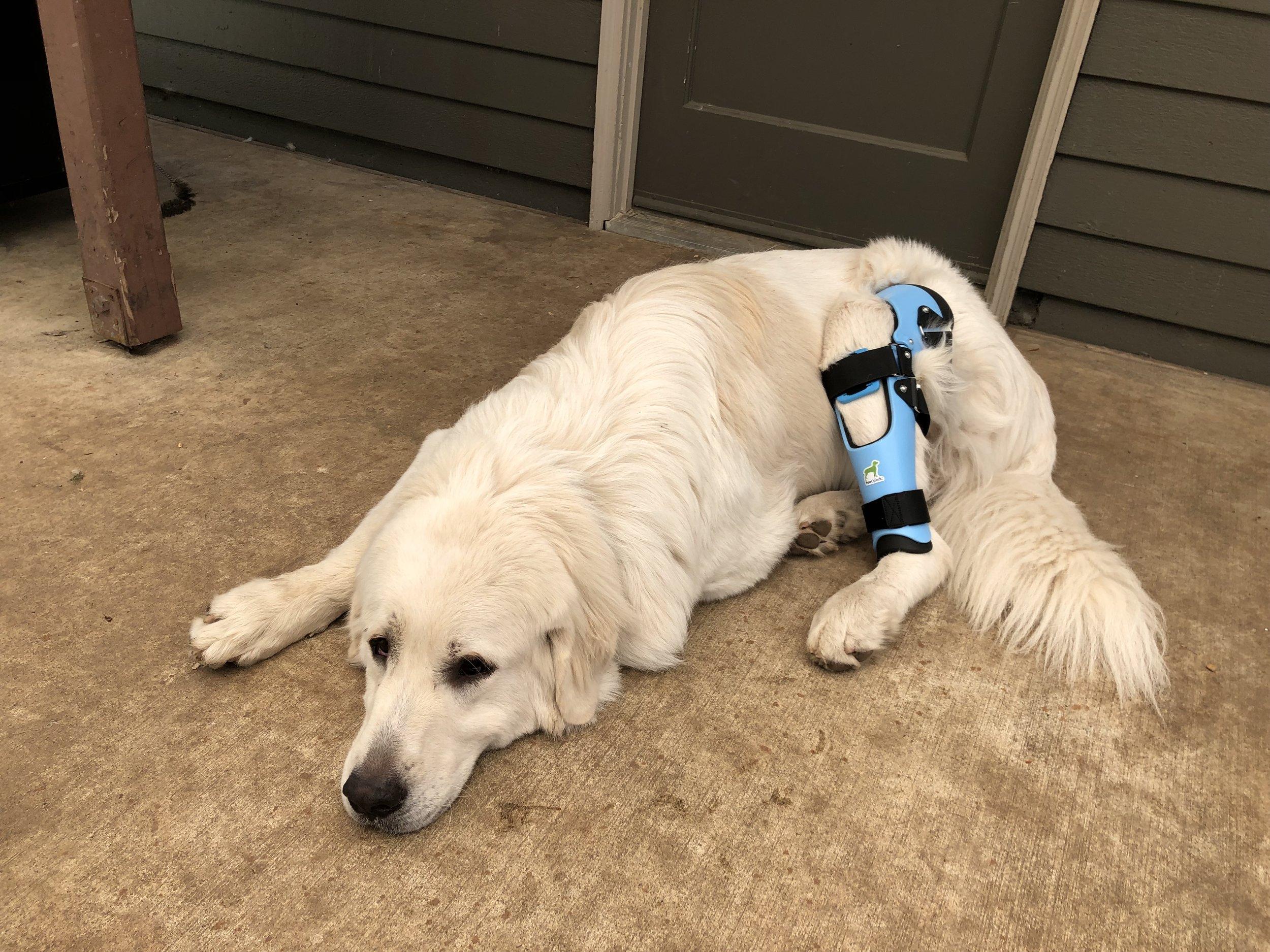 Canine ACL/CCL Knee (Stifle) Brace