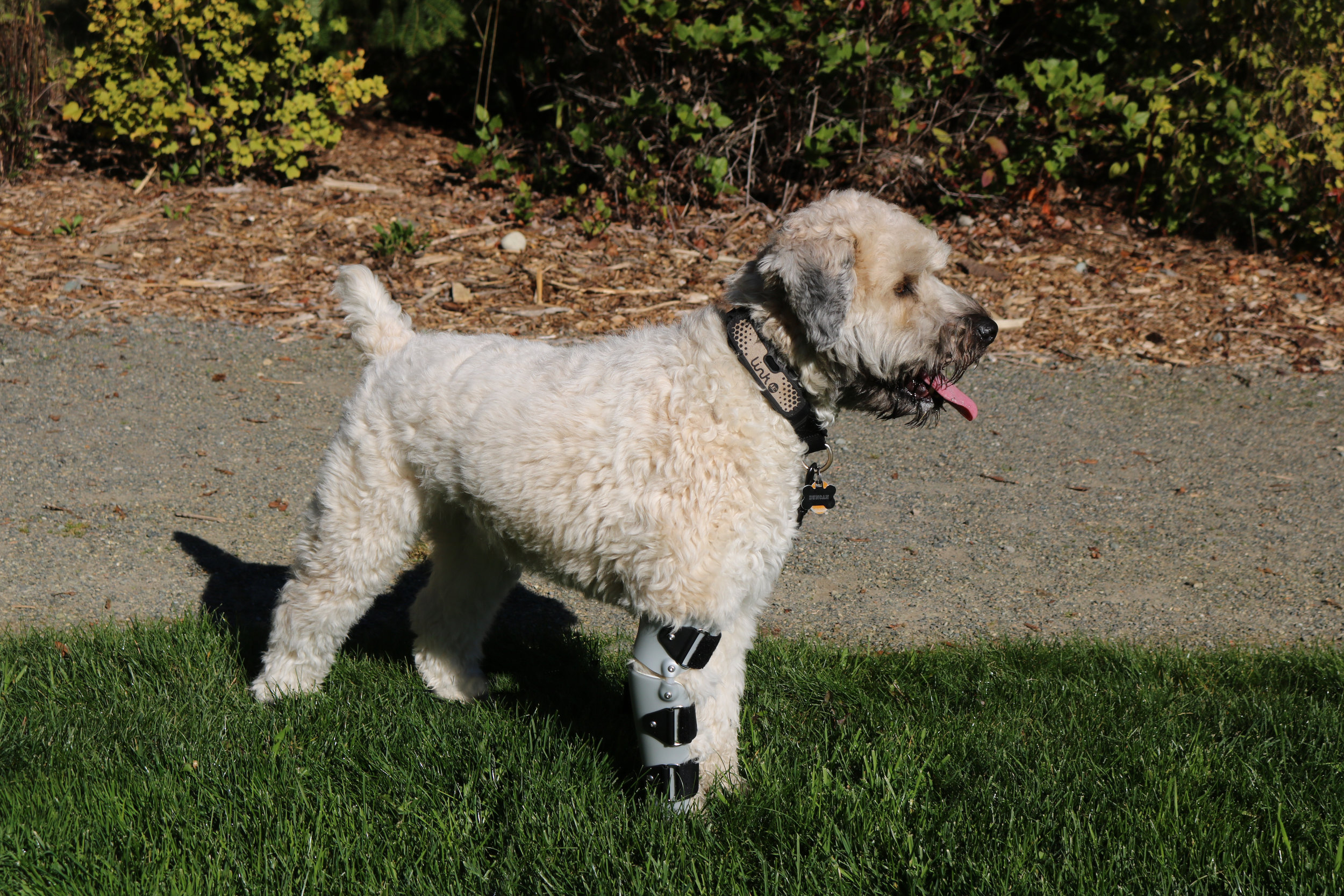 Canine Elbow Brace