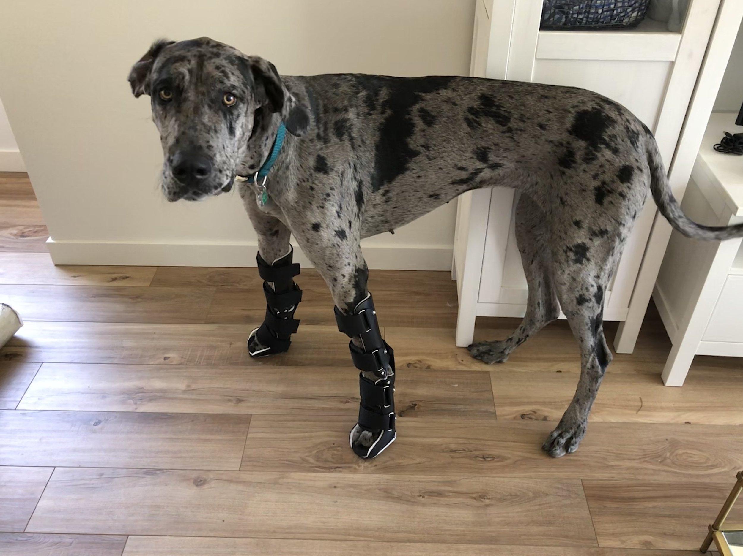 Canine Carpal Hyperextension Braces