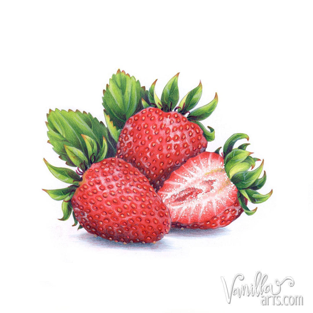 Marker Painting Foundations, an online Copic Marker coloring course designed to get you started right. Start with the basics and over twelve weeks, work your way to amazing depth and realism. | MarkerPainting.com