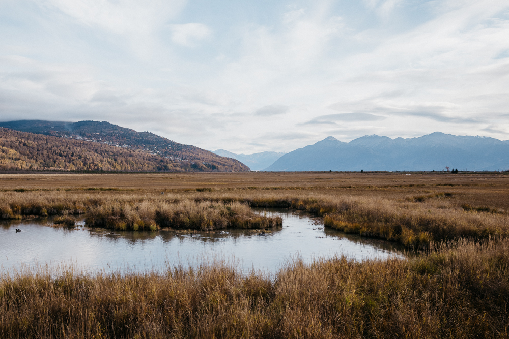 A 1550-foot boardwalk with interpretive signs and spotting scopes takes you into the marsh and up close to the wildlife.