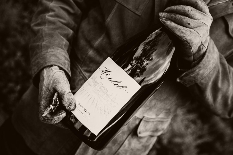Mirabel Vineyards Branding - harvest