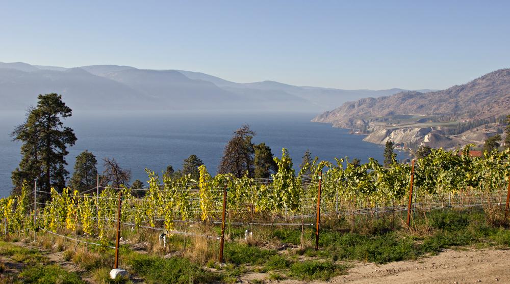 coolshanagh-winery-trip-vineyard.jpg