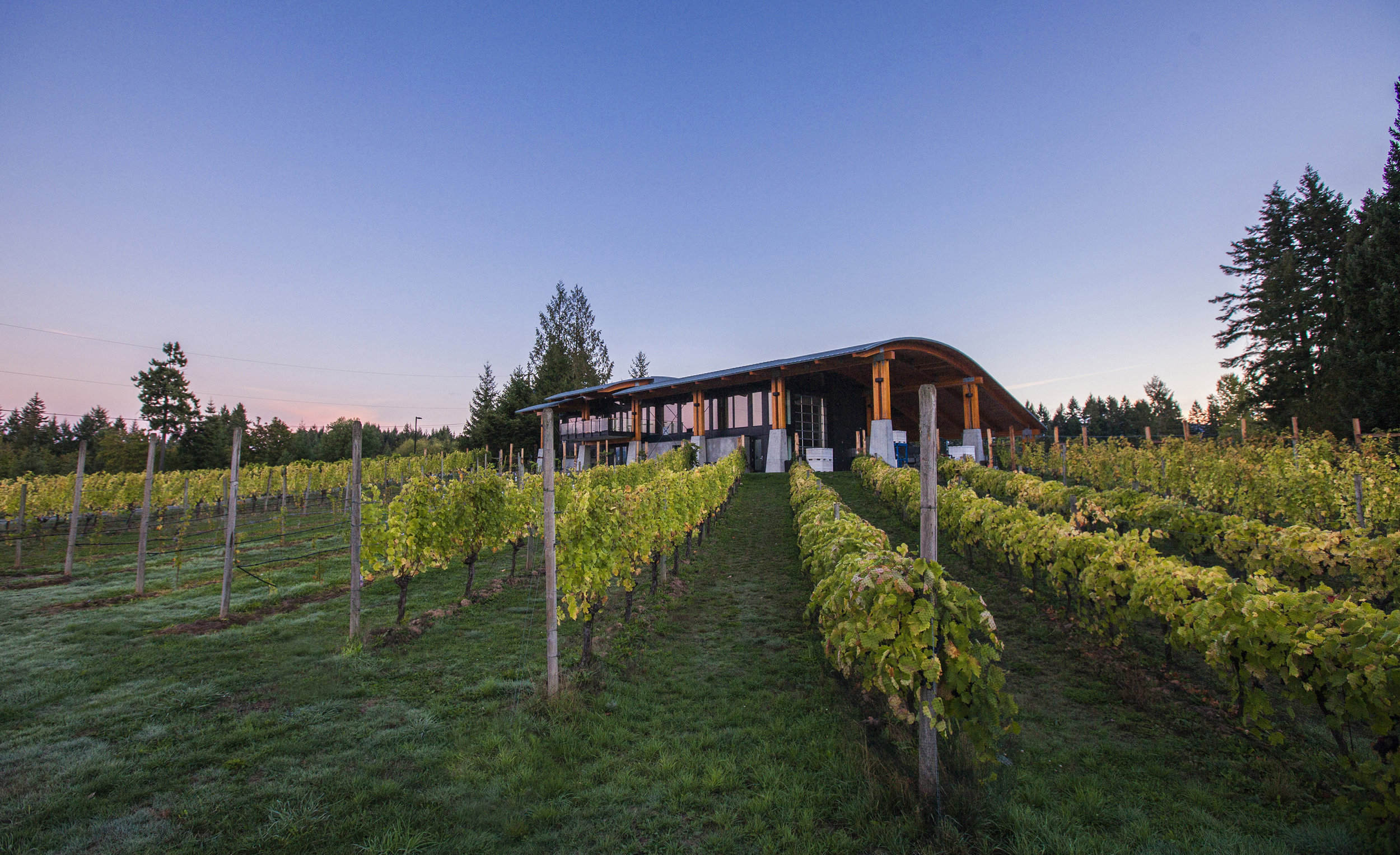 Blue Grouse has committed to stewarding the historic land on which the vines reside.