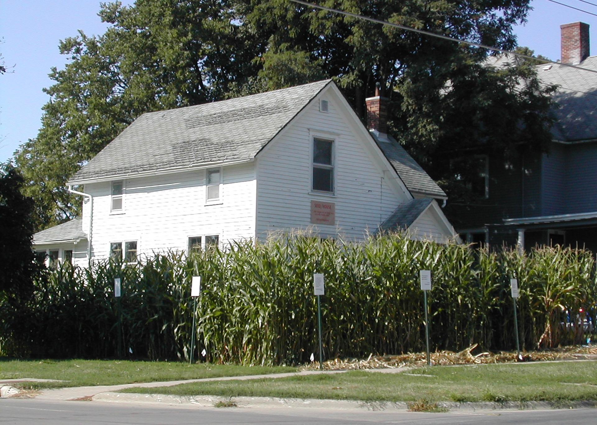 Seed/House, 2003