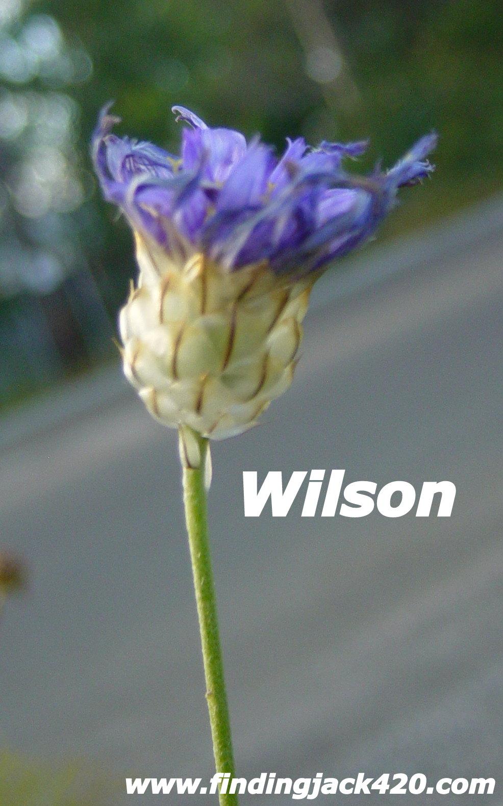 1-Wilson 2..jpg