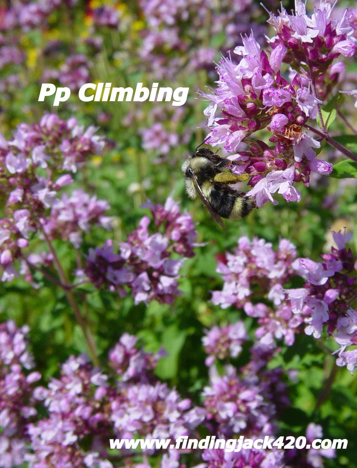 1-A Rock Climber.jpg