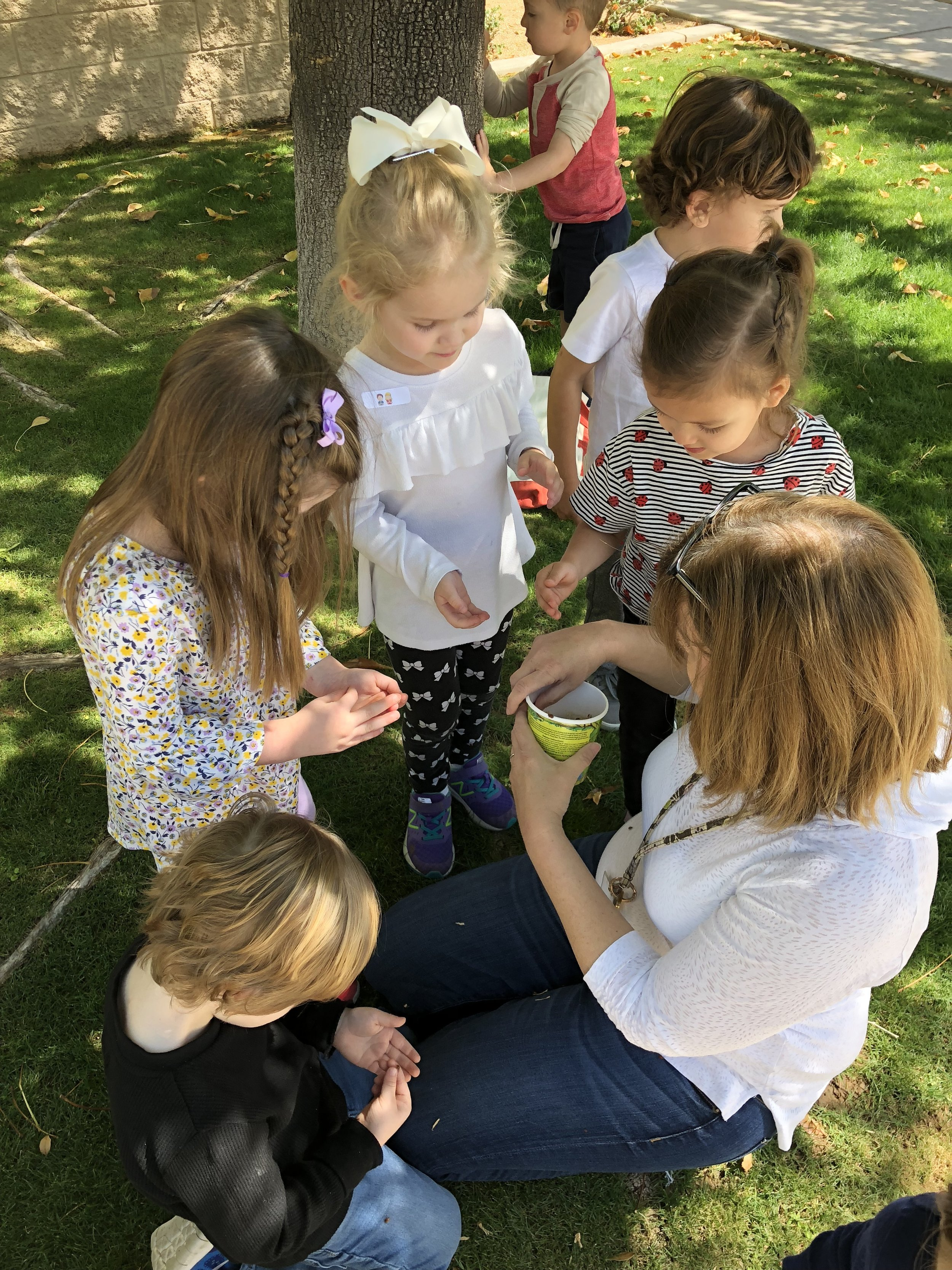 Hands On Learning with Ladybugs