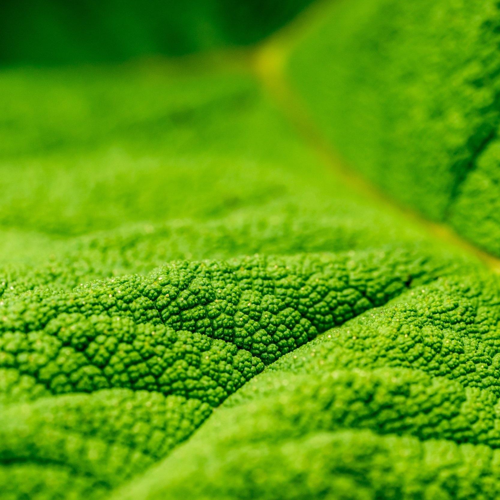 - Herbalism