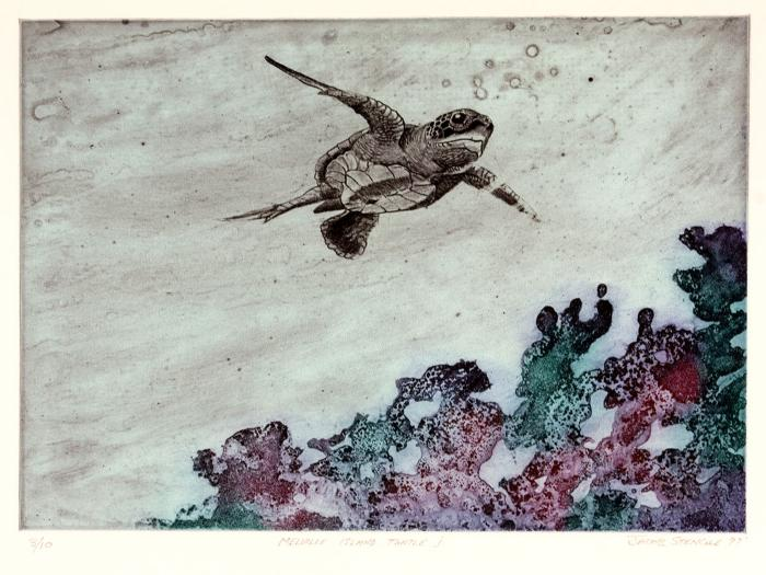 Melville Island turtle I