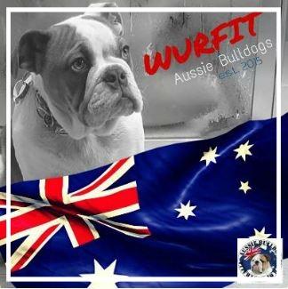 Wurfit Aussie Bulldogs -