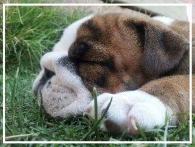 Torrington Park Aussie Bulldogs - Please contact: NikkiPhone: 0400 189 185eMail: mum3nlnw3@gmail.com