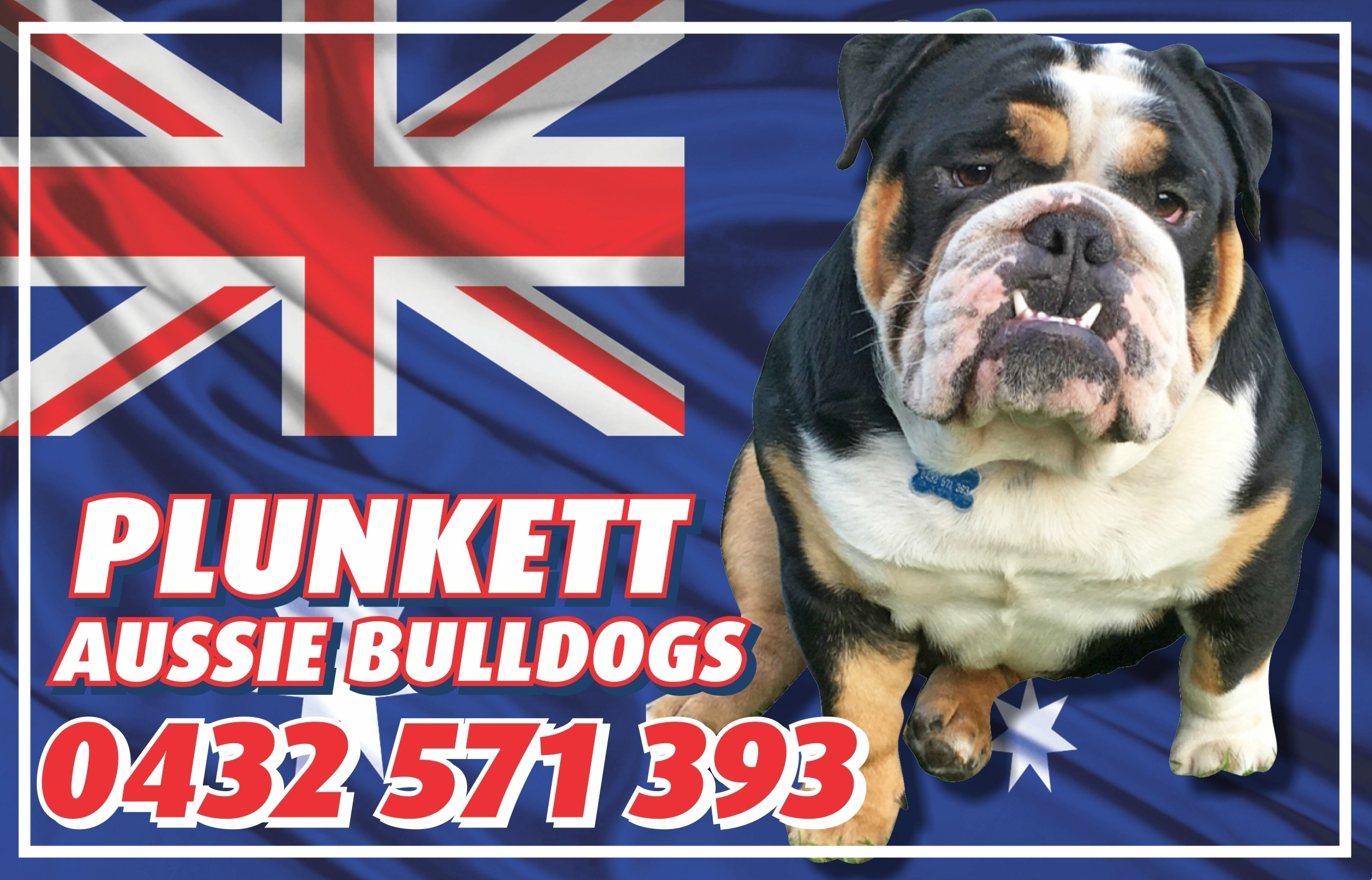 Plunkett Aussie Bulldogs - Located: MillicentPlease contact: SallyPhone: 0432 71 393eMail: salplunkett63@hotmail.com
