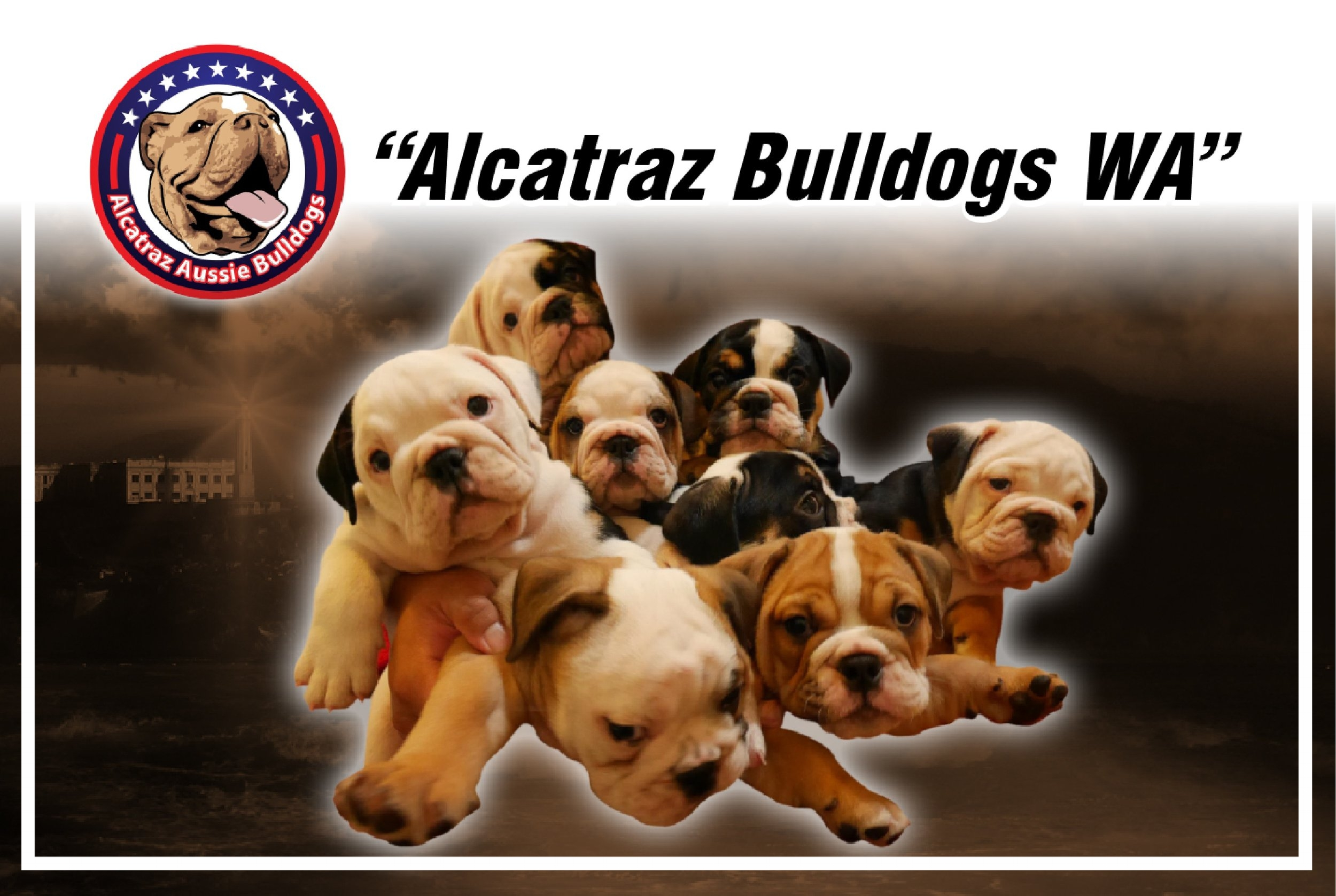 Alcatraz Aussie Bulldogs - Located: PerthPlease contact: AcePhone: 0449 796 969eMail: alcatrazaussiebulldog@gmail.com