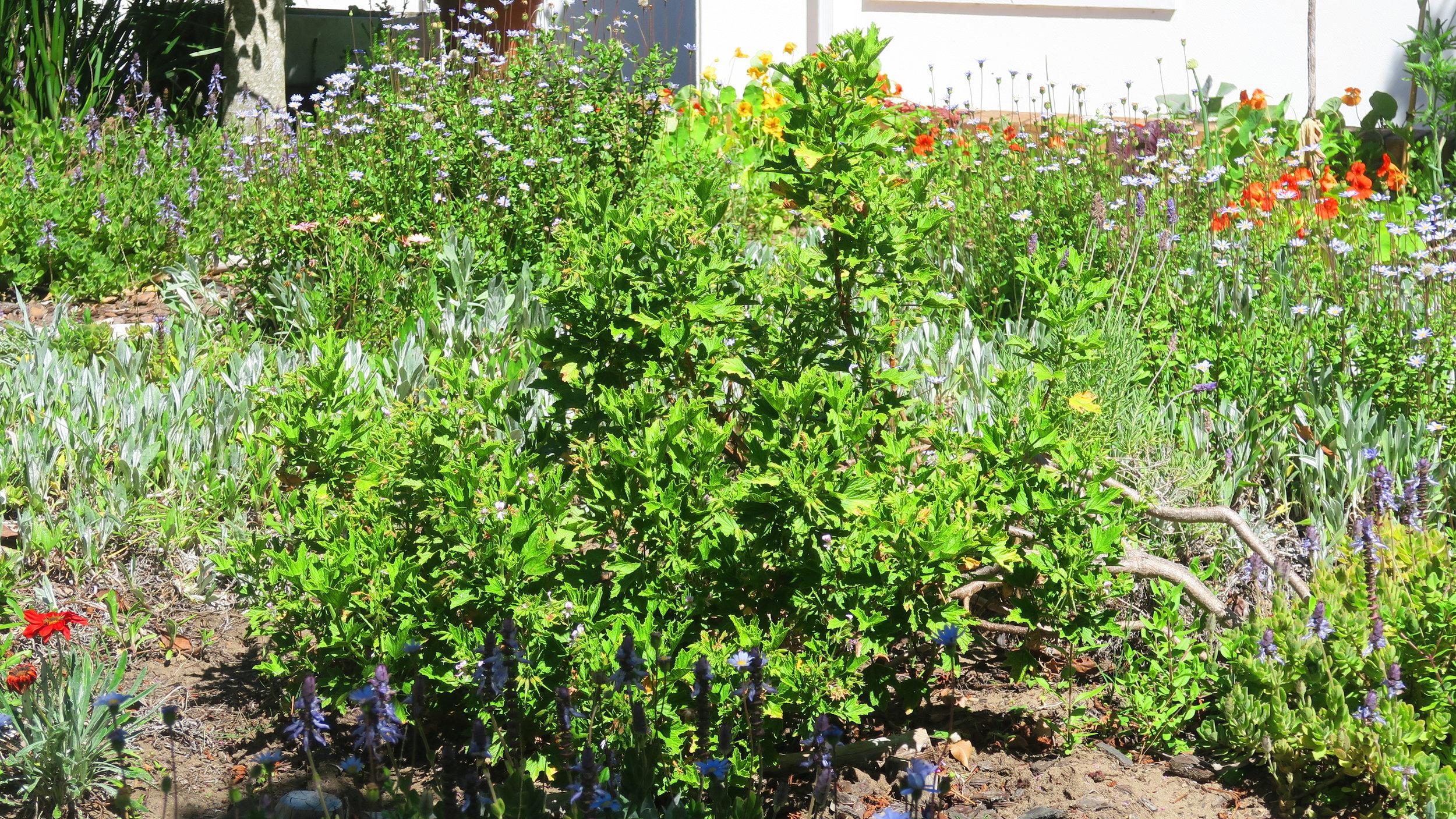 My garden on acid. Uric acid.