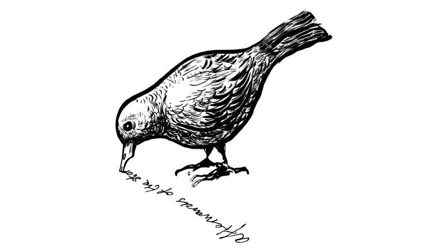 fågel_1.jpg