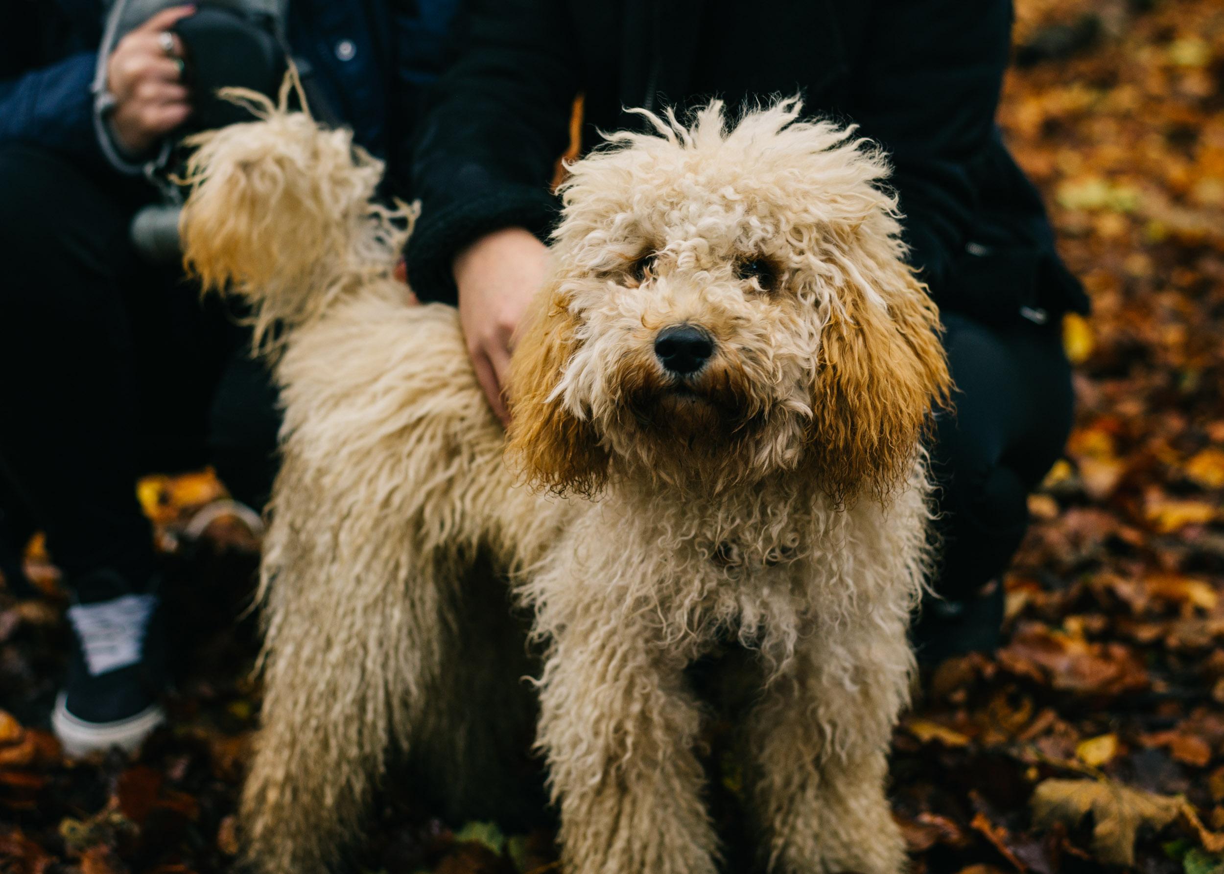 autumn mini session, Lancashire Towneley Park6