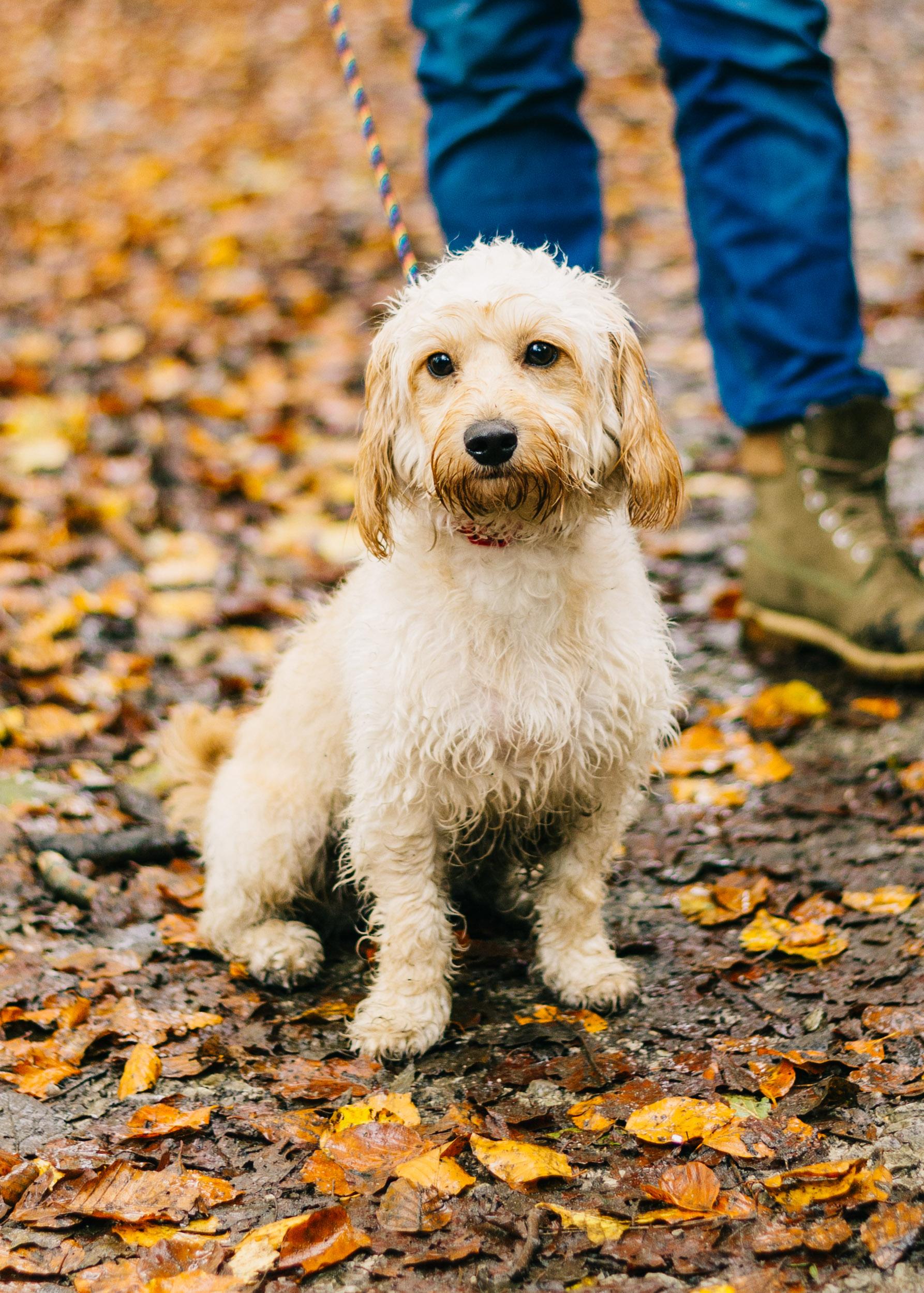 autumn mini session, Lancashire Towneley Park10