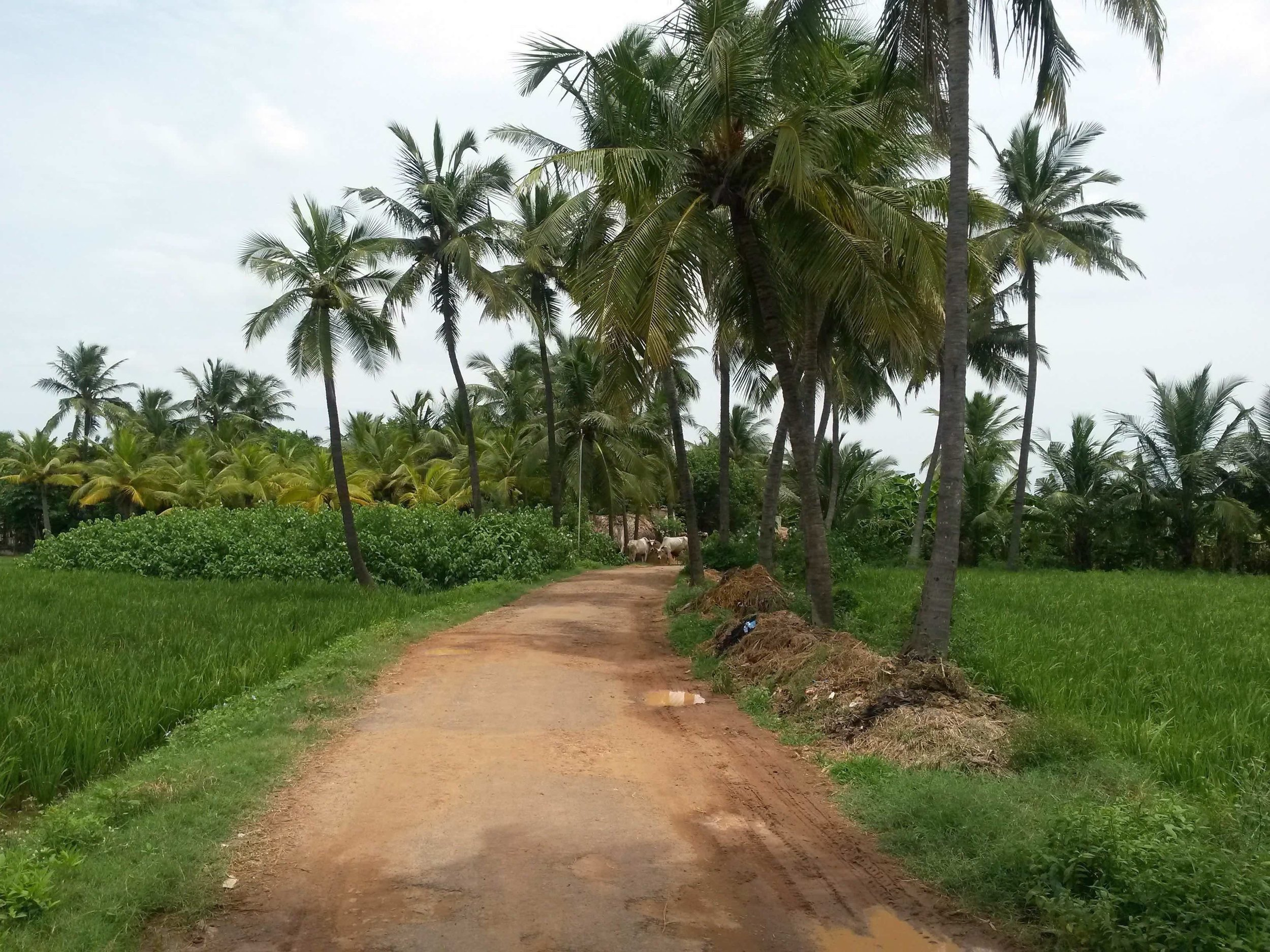 Country road near Pondichery 2.jpg