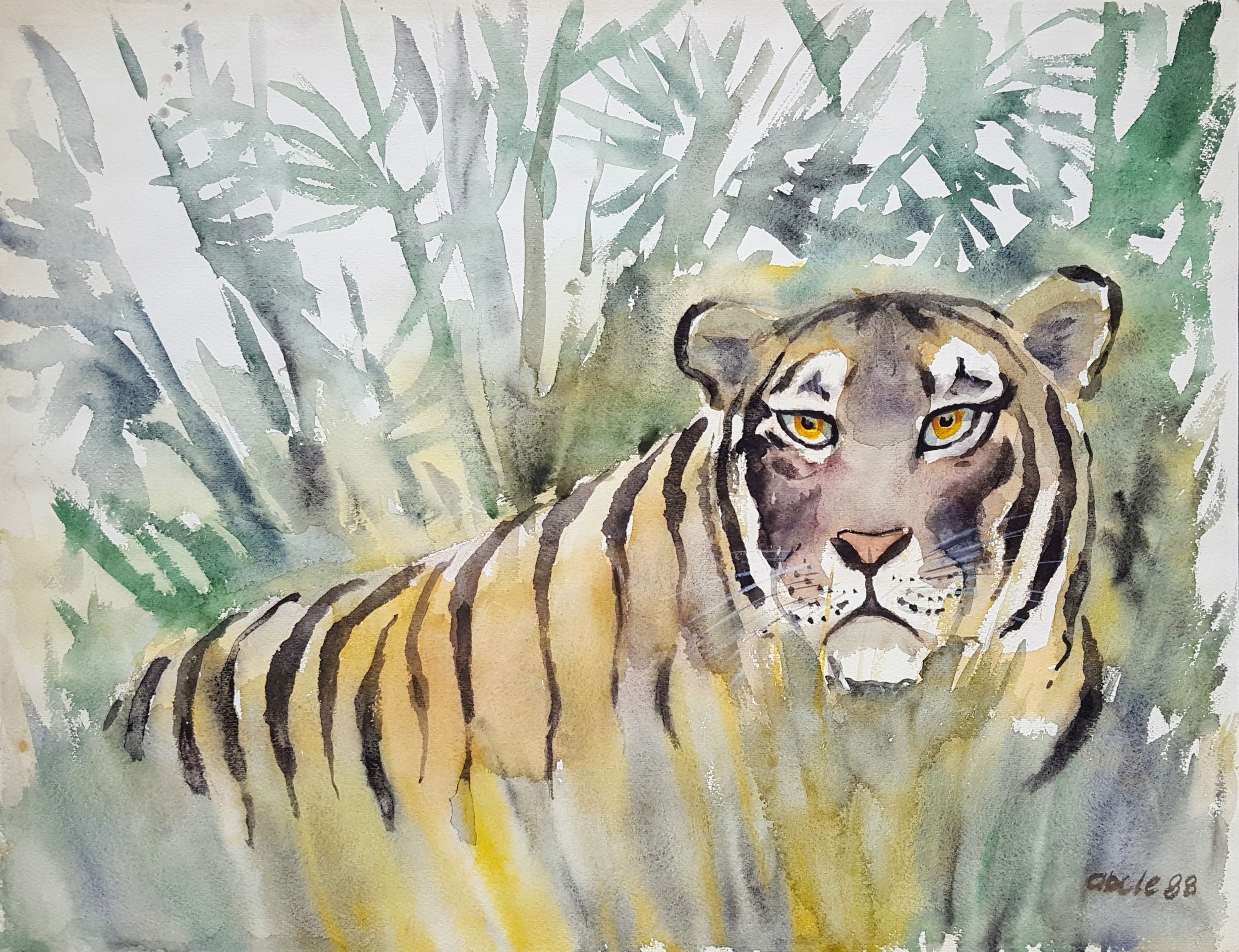 Indian Tiger in Bamboo