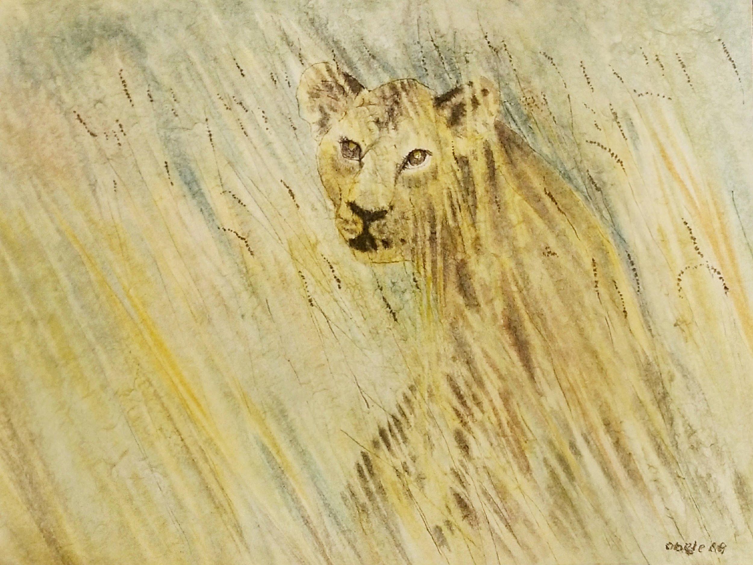 Junglöwe voll von Neugierde / Young Lion Full of Curiosity
