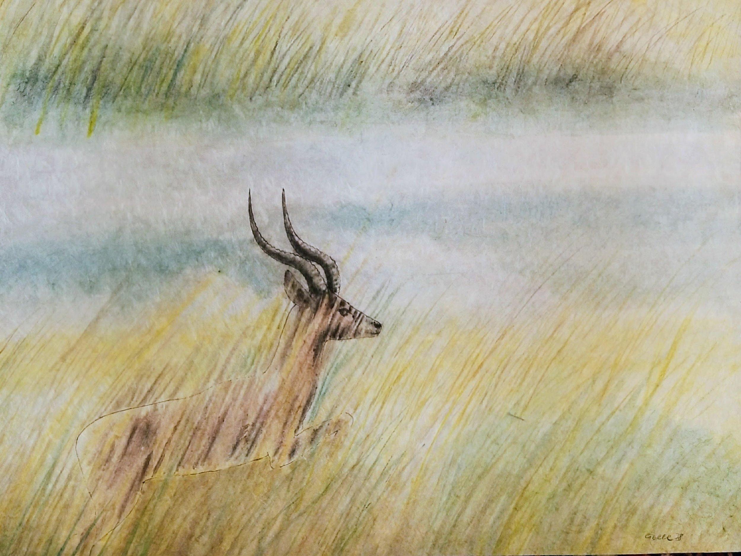 Wasserantilope (Ugandakob) im Schilfgras / Waterbuck (Ugandan kob) in Reeds