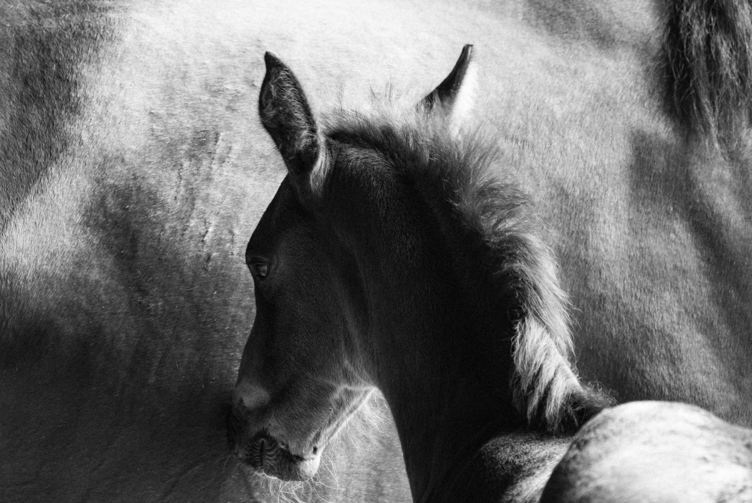 Thefoal_bw_website_SheonaAnnPhotography (1 of 1).jpg