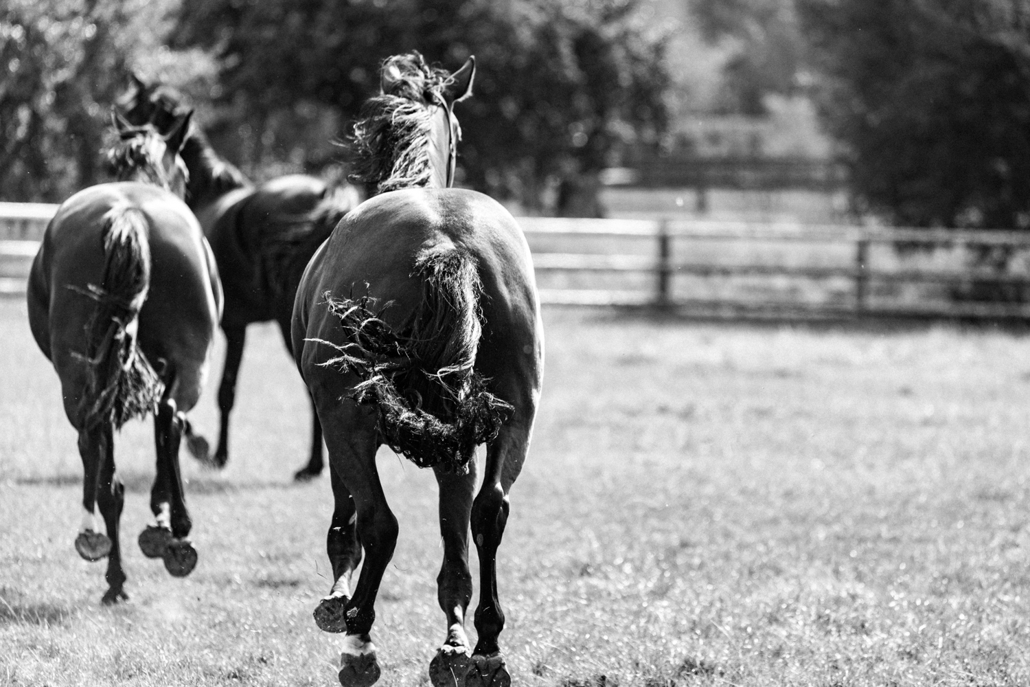 gallop-bw-inaction_SheonaAnnPhotography (1 of 1).jpg