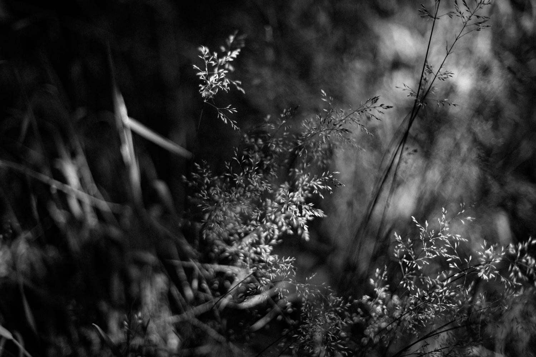 nettles&co_SAP_SheonaAnnPhotography (14 of 14).jpg
