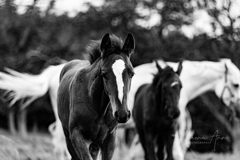 Sheona_Ann_photography_FoalsmaresAutumn_oct19 (7 of 38).jpg