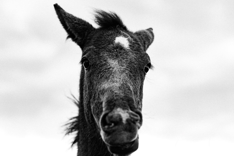 Sheona_Ann_photography_FoalsmaresAutumn_oct19 (13 of 38).jpg