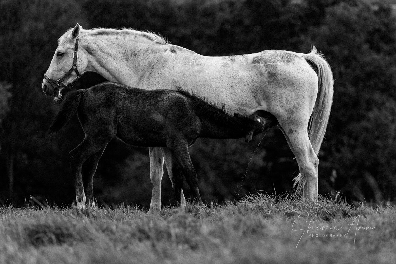 Sheona_Ann_photography_FoalsmaresAutumn_oct19 (6 of 38).jpg