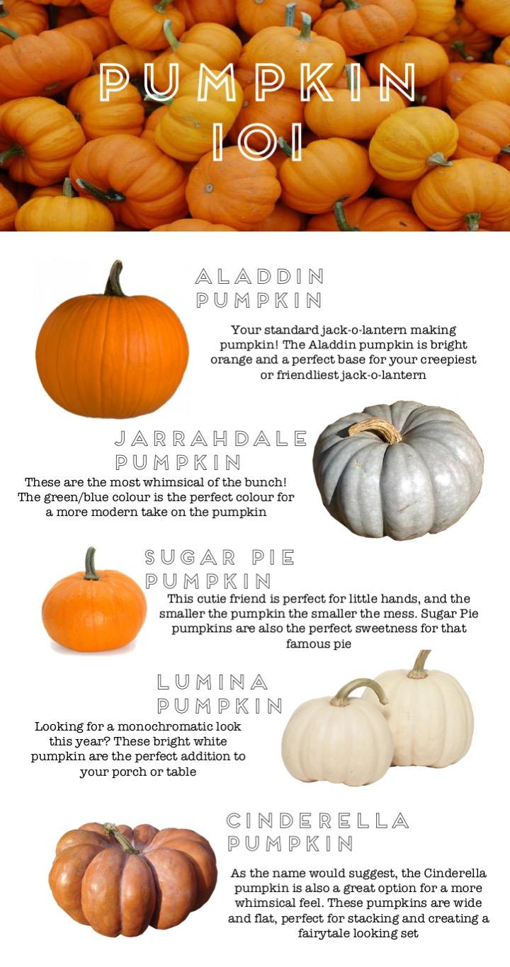 pumpkins 101.jpg