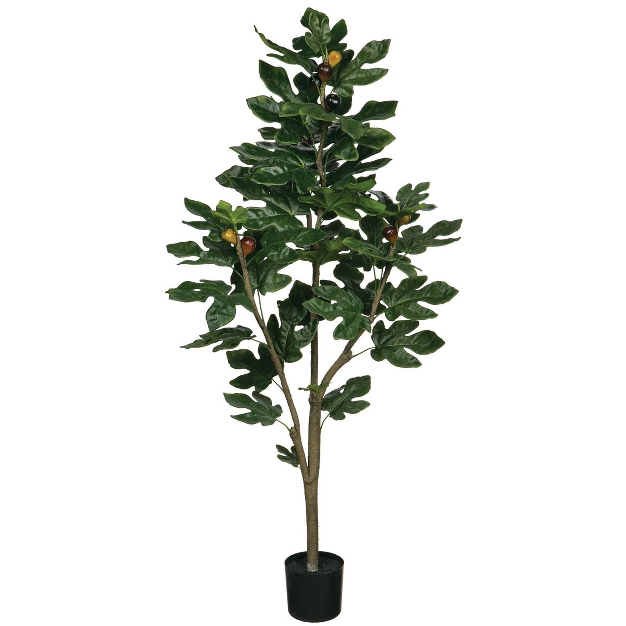 "4'2"" Fig Tree, Amanda's House Of Elegance  ($138.95)"