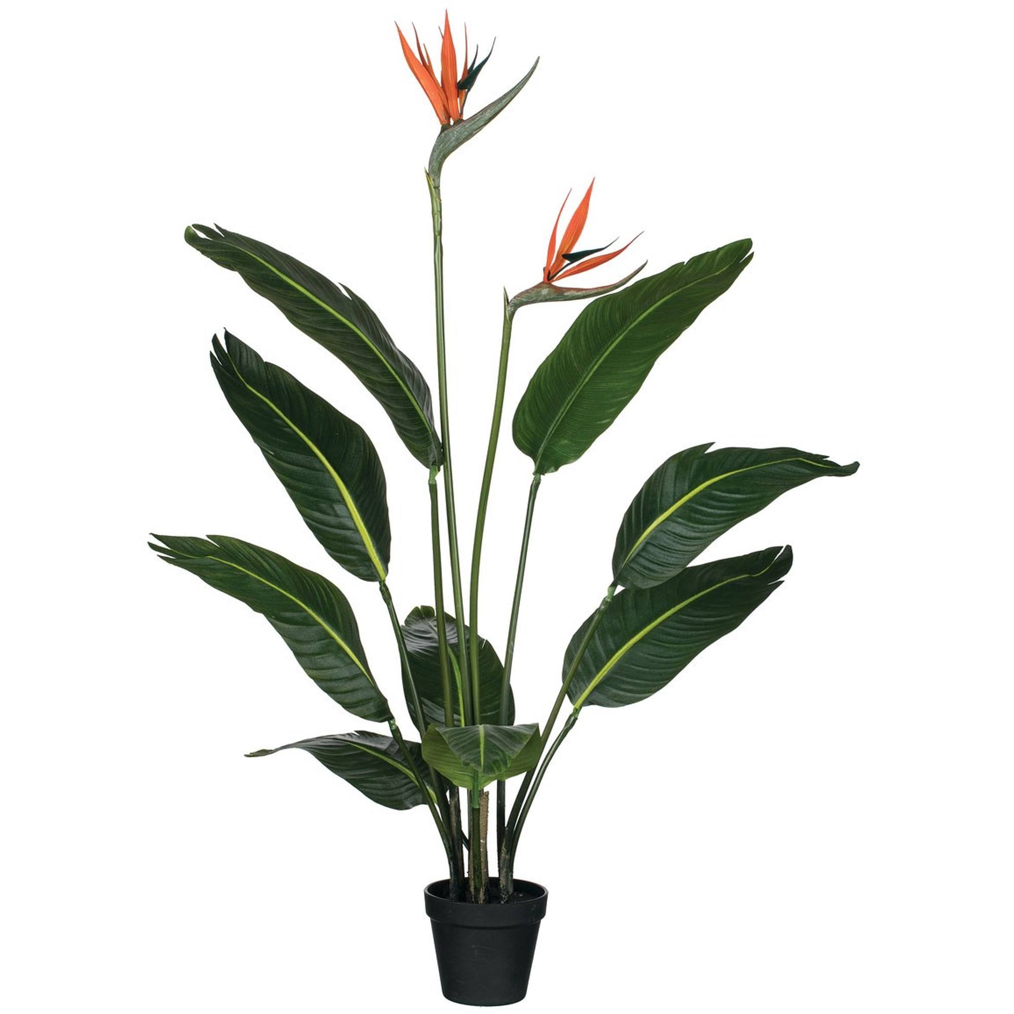 "39"" Bird Of Paradise, Amanda's House Of Elegance  ($138.95)"