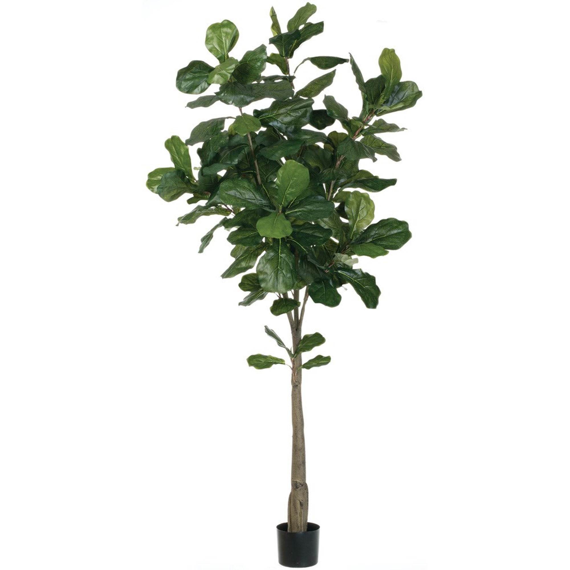 "6'2"" Fiddle Leaf Tree, Amanda's House Of Elegance  ($299.95)"