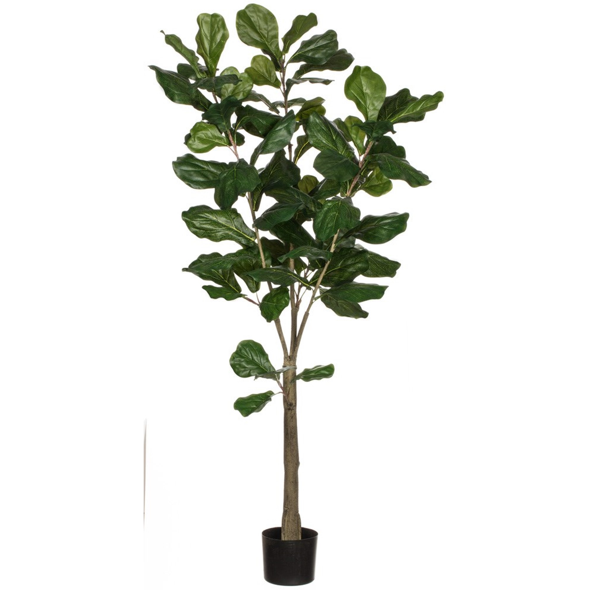 5' Fiddle Leaf Tree, Amanda's House Of Elegance  ($179.95)