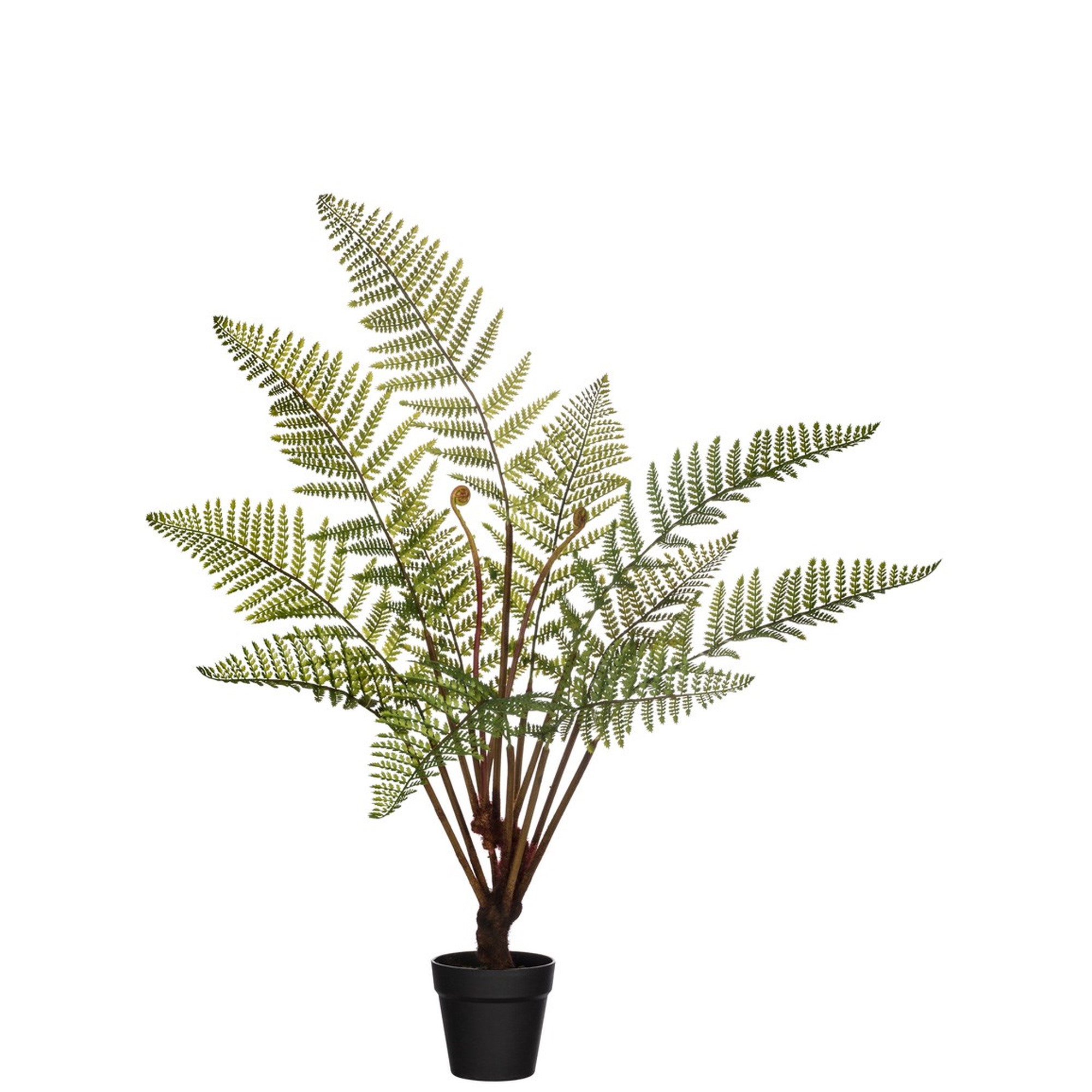 "41"" Potted Fern, Amanda's House Of Elegance  ($84.95)"