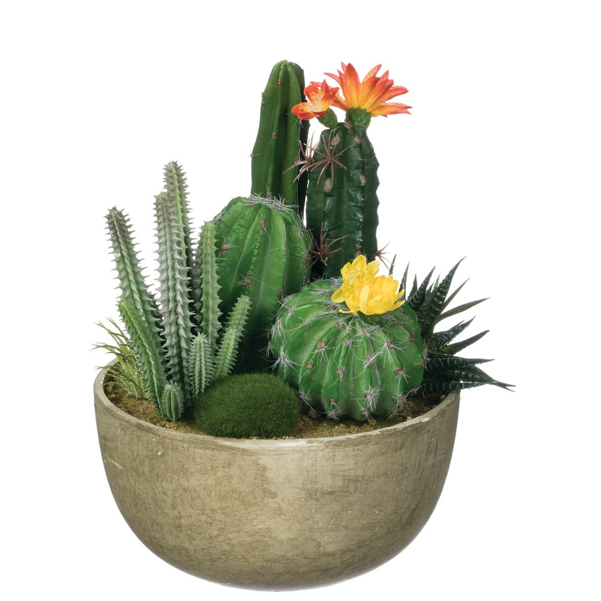 Potted Cacti Garden, Amanda's House Of Elegance  ($56.95)