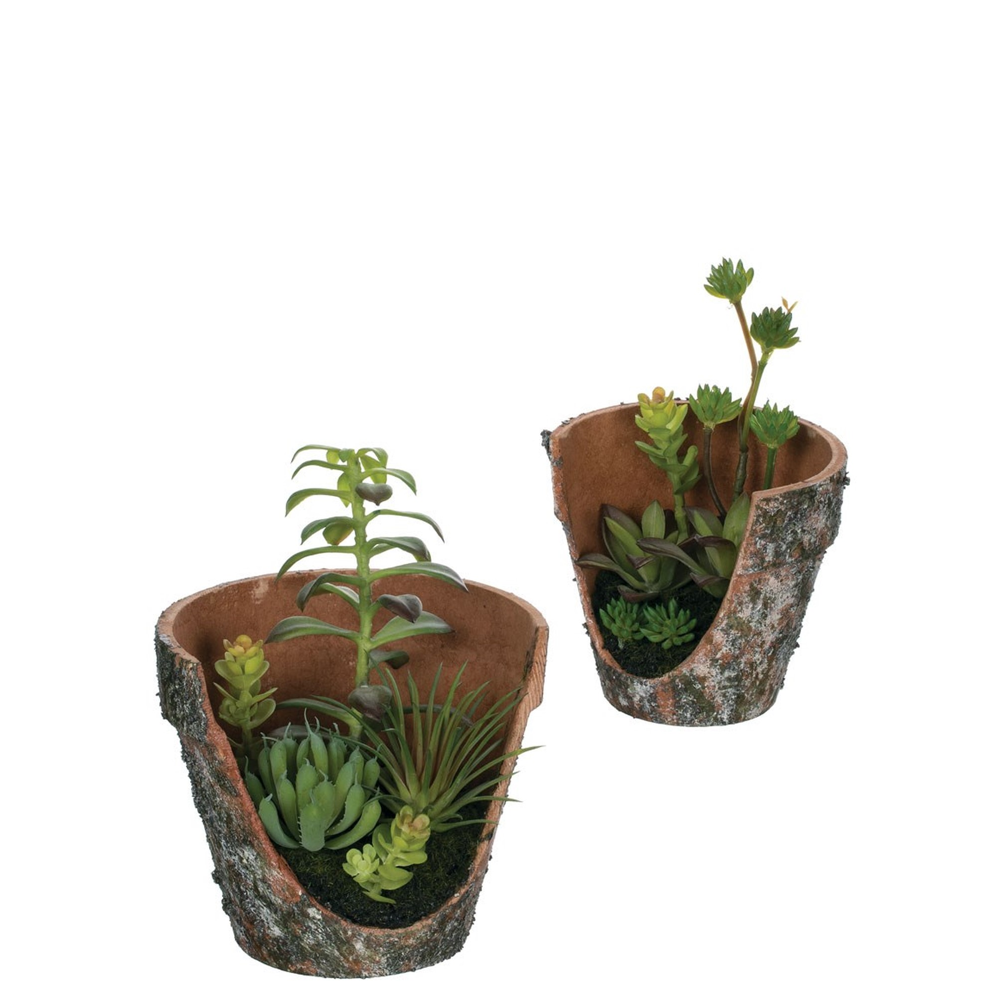 Potted Succulents (2 Sizes), Amanda's House Of Elegance  ($19.95 small, $26.95 large)