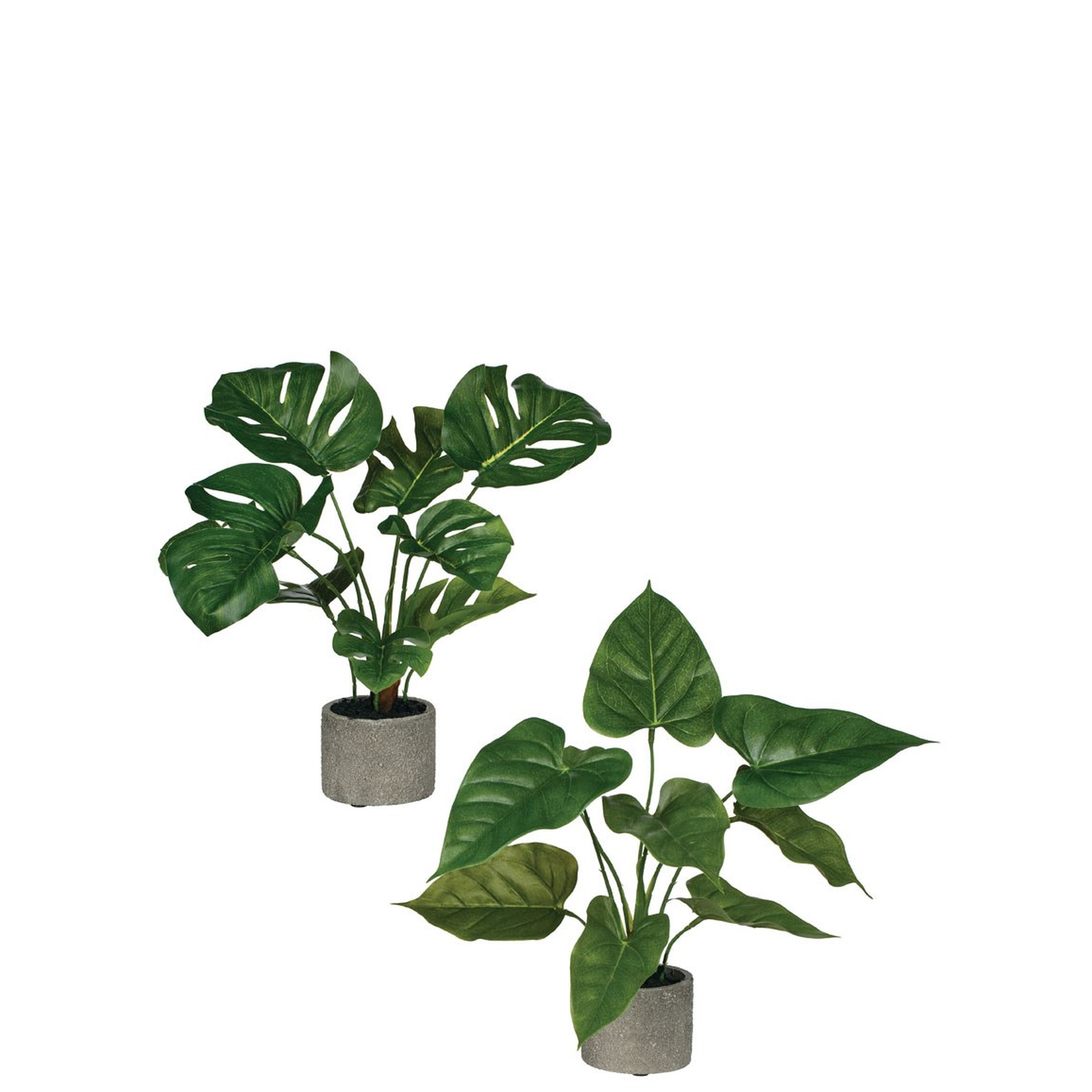 Philodendron & Anthurium in Cement Planters, Amanda's House Of Elegance  ($23.95 /ea)