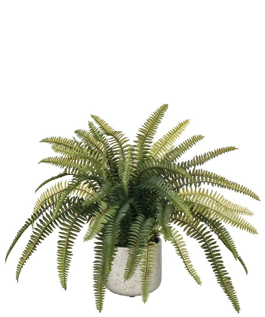Potted Fern, Amanda's House Of Elegance  ($62.95)