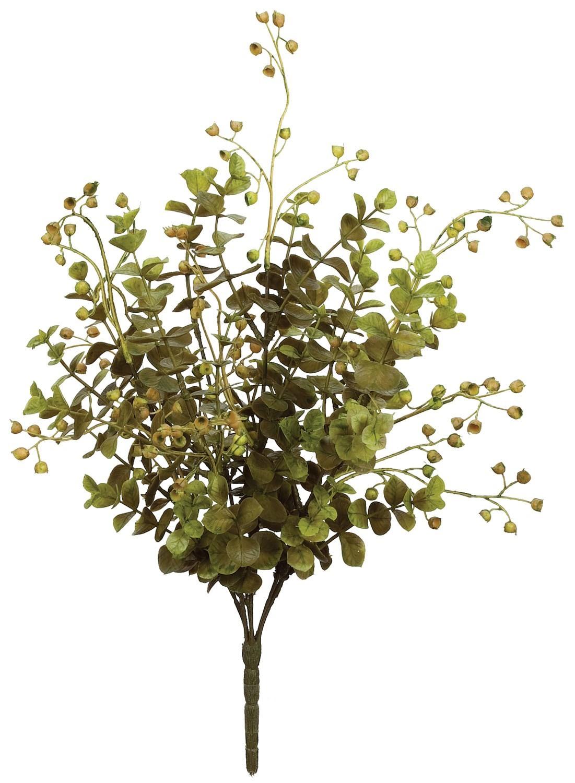 Eucalyptus Plant, Amanda's House Of Elegance  ($9.95)