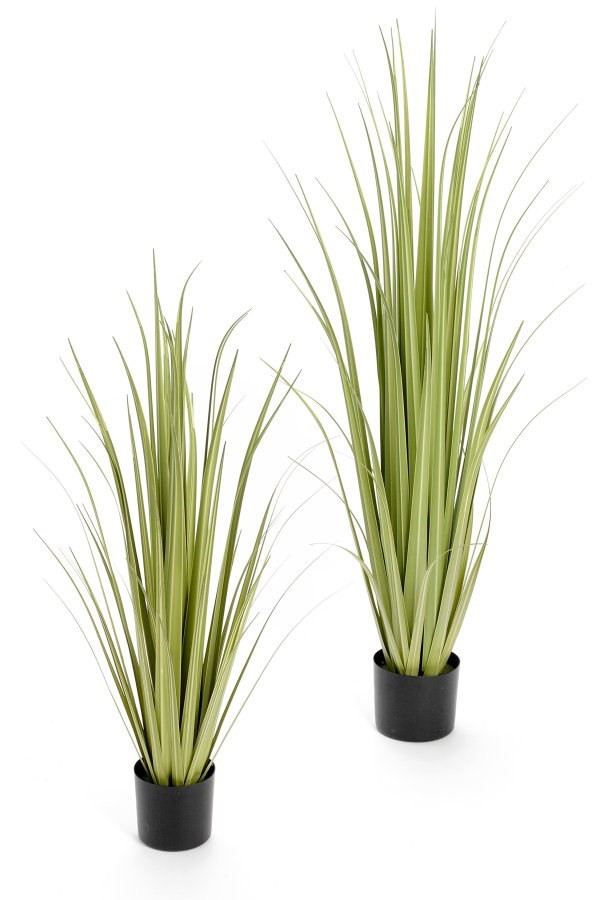 "36"" Grass Gladious w/Pot, Amanda's House Of Elegance  ($114.95)"