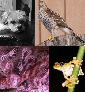 frog_dog_hawk_man.jpg