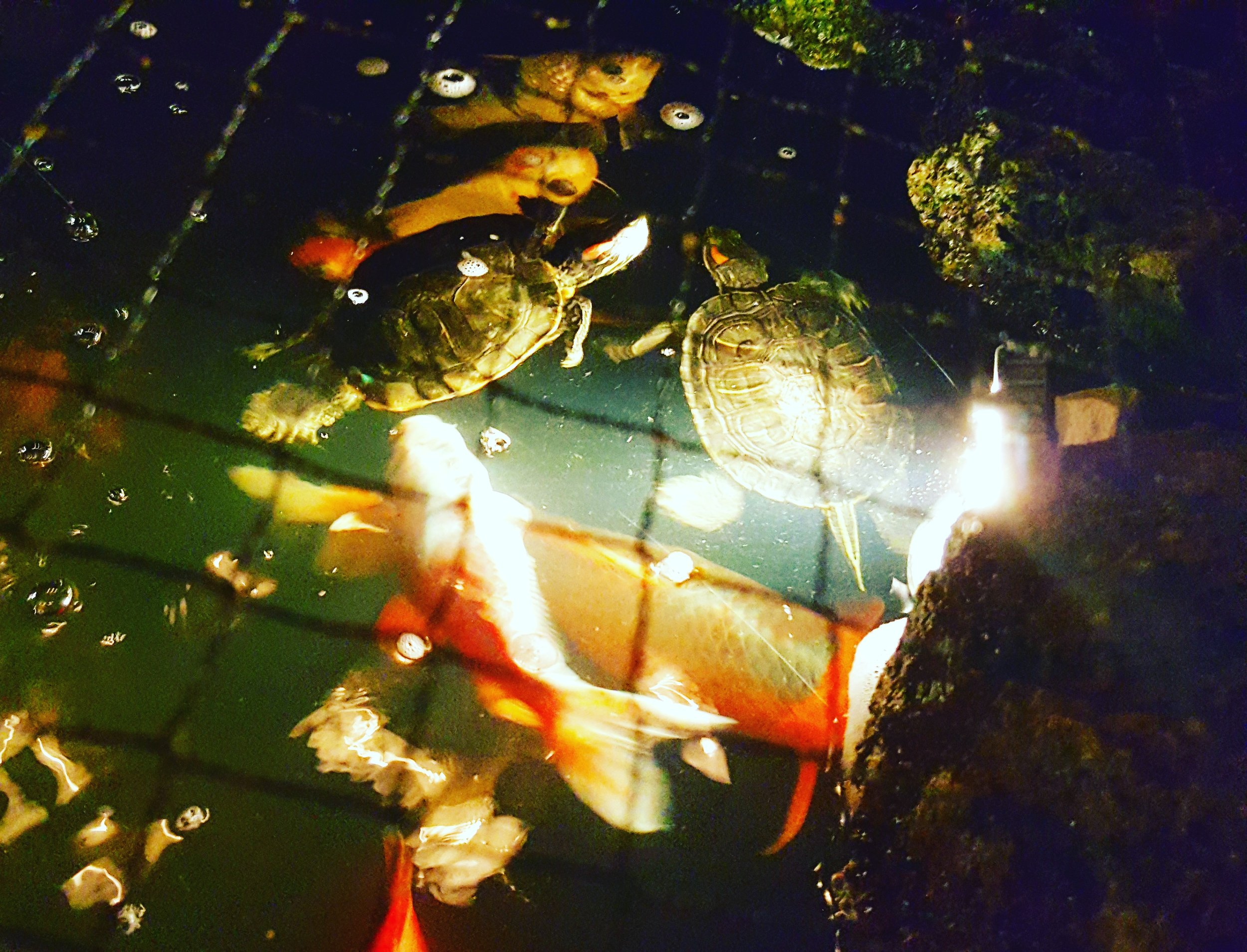 Turtles Bodhi&FBIAgentJohnnyUtah.jpg