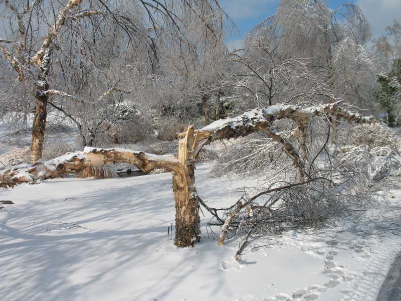 broken tree snow.jpg